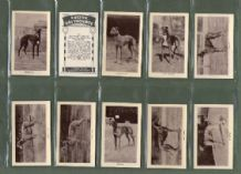 Cigarette cards trade Racing Greyhounds dogs RARE set